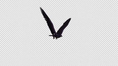 Black Eagle - Flying Loop - Side Angle