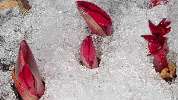 Cover Image for Time-Lapse Shot of Melting Snow