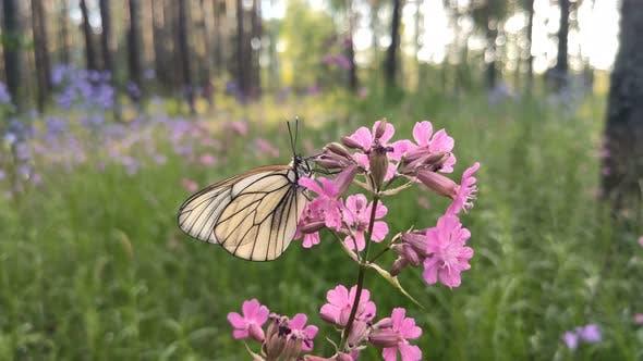 Butterfly flying off a blue flower