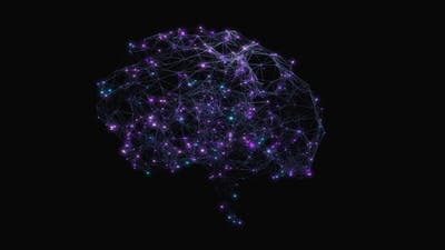 Brain 03