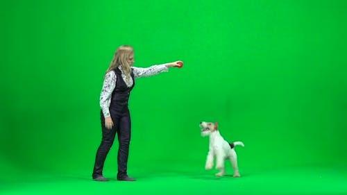 Young Woman To Train a Dog. Green Screen