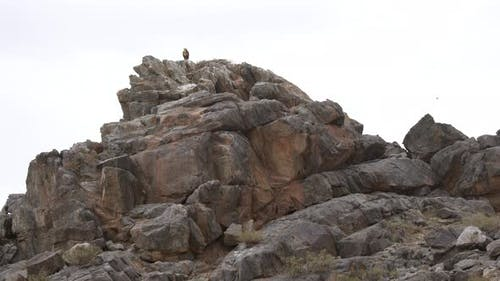 A Hawk Watches From its Nest in Rock