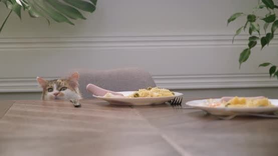 Thumbnail for Humor, Domestic Cat Steals Sausage Food From Plate on Table