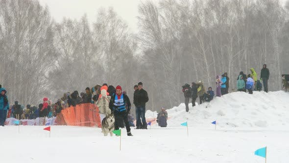 Thumbnail for Husky Dog and Man Athlete During Skijoring Competitions