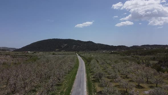 General View of Blooming Apple Orchard with Drone