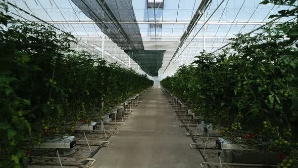 Thumbnail for Greenhouse Cultivation