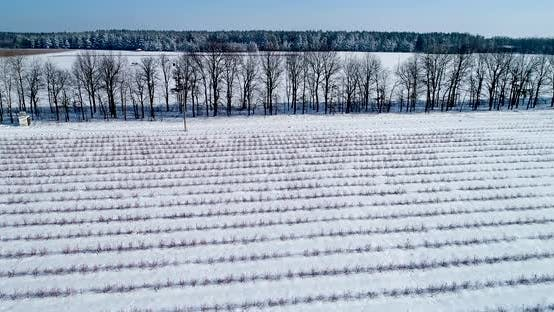 Thumbnail for Aerial View of Blueberry Field in Winter