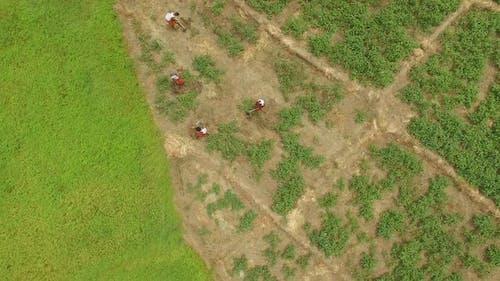 Plantation Workers Upward Spiral