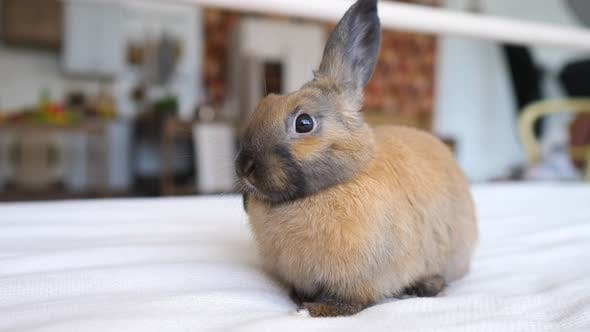 Cute Bunny Sitting On Bed At Home
