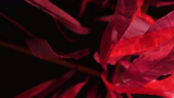 Thumbnail for Deep Red Stripes Moving Gently on Black Background. Conceptual Romantic Story of the Room and Open