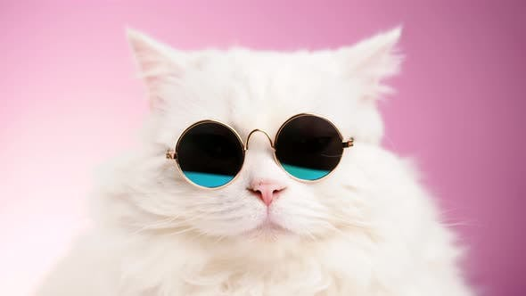 Thumbnail for Stock video  Close portrait of white furry cat in fashion sunglasses Studio footage