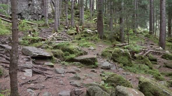 Thumbnail for Dark Mountain Forest with Rocks, Panorama