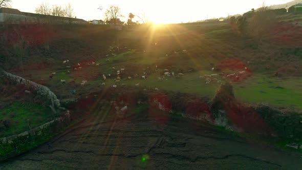 Thumbnail for Farming at Sunset