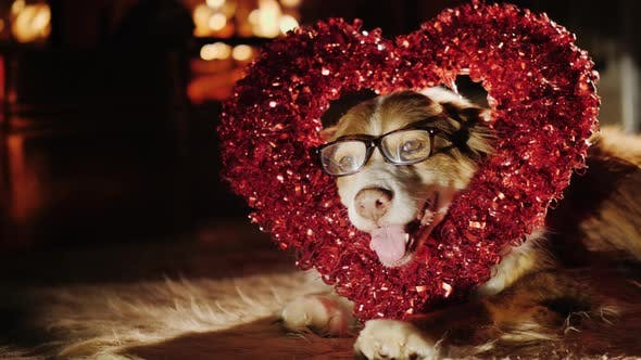 Thumbnail for A Cute Shepherd in Glasses Sits with a Heart-shaped Decoration
