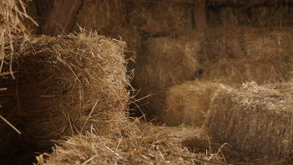 Thumbnail for Hay stacks in curing process 4K 2160p 30fps UltraHD tilting footage - Stock of  rectangular bales in