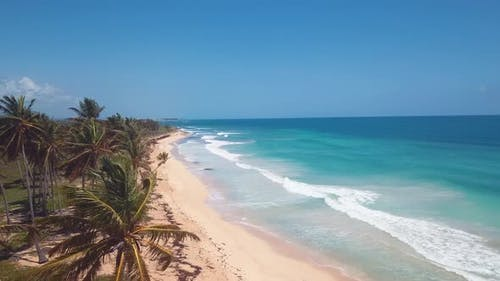 4k 24fps Dron Shoot In The Caribbean Beach With Pamlstree With Waves In The Sea 5