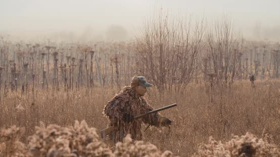 Cover Image for Hunter in hunting equipment with a rifle in his hand sneaks through the bush in the field