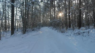 Forest Road with Snowcovered Trees in Frosty Weather