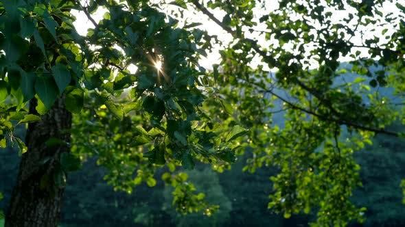 Blätter auf dem Wind mit Sonne im Hintergrund
