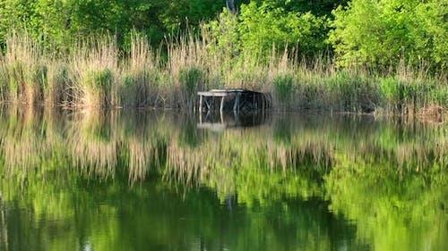 Fischen Mauerwerk am Fluss im Schilf. Grüner Wald im Frühling