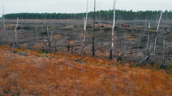 Thumbnail for A Landscape of Autumn Field and Scorched Forest - Aerial View