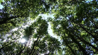 Trees 4K