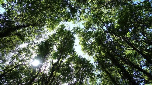 Bäume 4K