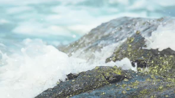 Thumbnail for Crabs on the Rock at the Beach