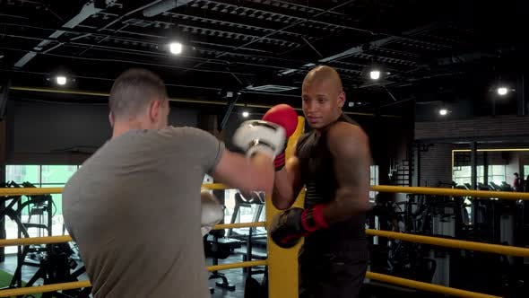 Thumbnail for Two Male Boxers Sparring in Boxing Ring at the Gym
