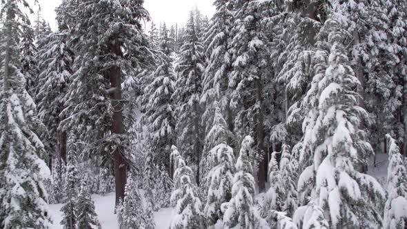 Thumbnail for Umzug vorbei an verschneiten Wäldern