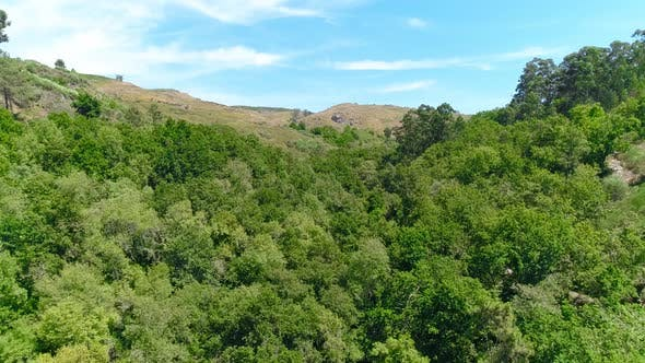 Thumbnail for Aerial View of Trees in the Forest