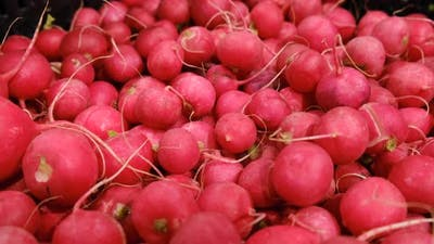 Red Radish for Sale at a Local Farmers Market