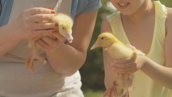 Grand-mère et petite-fille méreconnaissables tenant des canetons jaunes mignons à la lumière du soleil. Positif