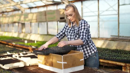 Thumbnail for Close Up of Female Gardener Arranges Seedlings