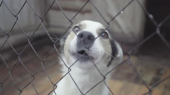 Homeless Dogs in a Dog Shelter