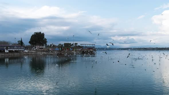 Thumbnail for Seagulls Flying over the Lake and Pier