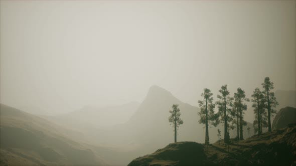 Thumbnail for Misty Forest on the Mountain Slope