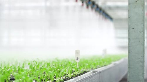 Modern Farm of Water Irrigation Organic Vegetables in Greenhouse with Hydroponic Technology Spbd