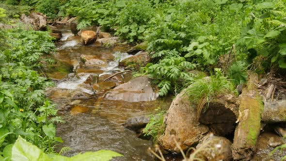 Thumbnail for Flow Down Clean Water Through Stones in Forest Water Fall