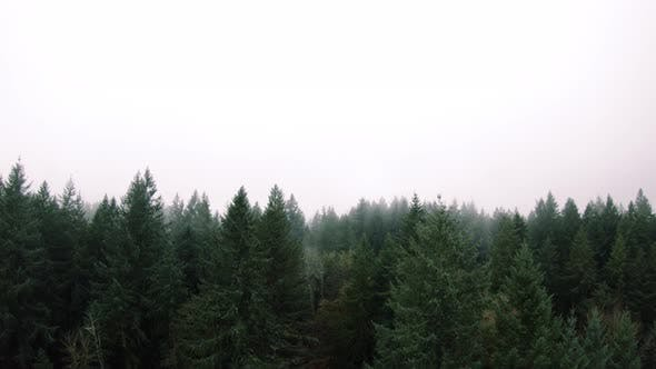 Thumbnail for Drone Dolly Of Evergreen Forest Tree Tops With Hazy Fog Clouds