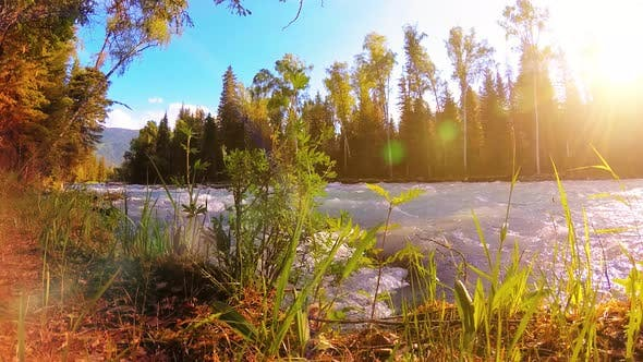 Thumbnail for Meadow at Mountain River Bank. Landscape with Green Grass, Pine Trees and Sun Rays