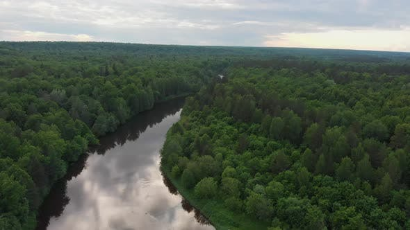 Nature Landscape - River Divides the Coniferous Forest