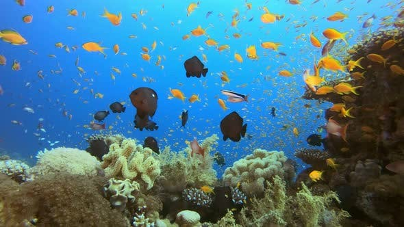 Thumbnail for Underwater Marine Tropical Colorful Life