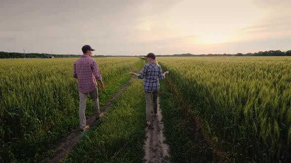 Thumbnail for Young Farmers Walk Along a Field of Unripened Wheat