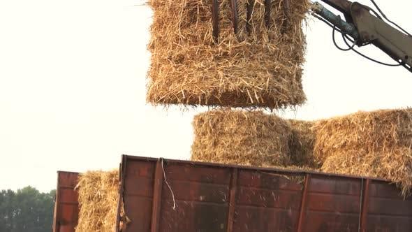 Folding Hay Stacks.