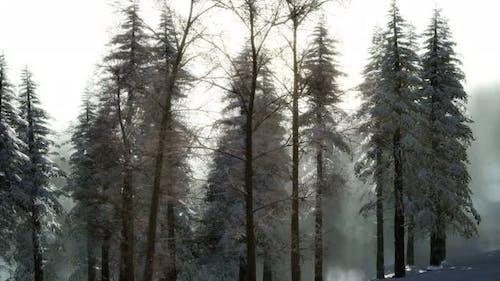 Splendid Christmas Scene in the Mountain Forest