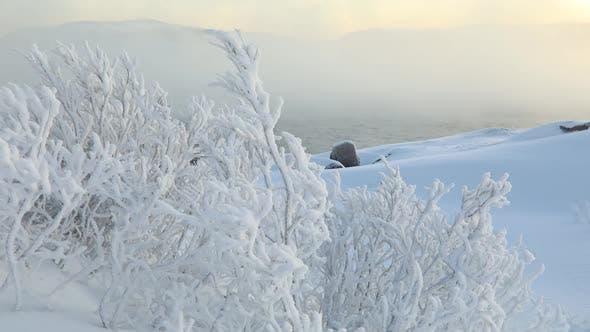 Thumbnail for Trees in Frost in Severe Frost on the Shores of the Arctic Ocean