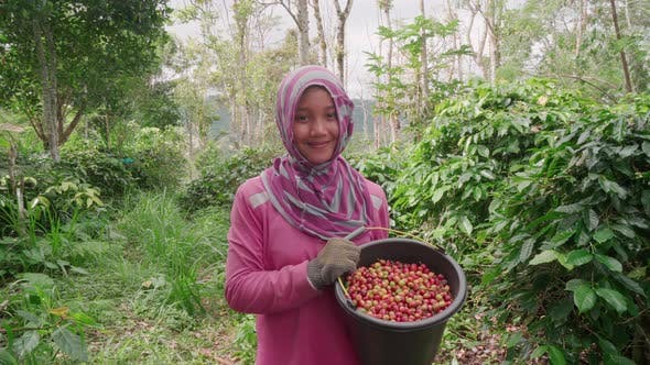 Thumbnail for Girl With Full Bucket Of Coffee Cherries