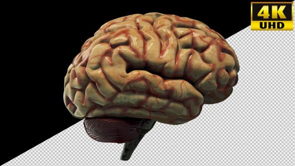 Brain Medicine On Alpha Channel Loops Pack V2