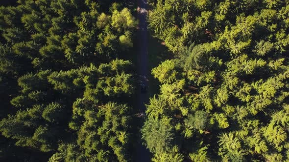 Cover Image for AERIAL: Birdsview on Forest Road with Car, Sunshine, Germany